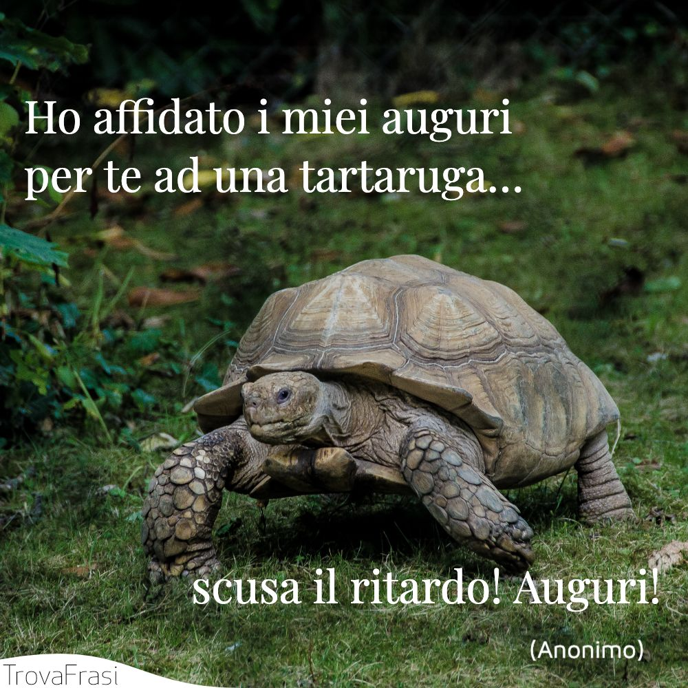 Ho affidato i miei auguri per te ad una tartaruga… scusa il ritardo! Auguri!