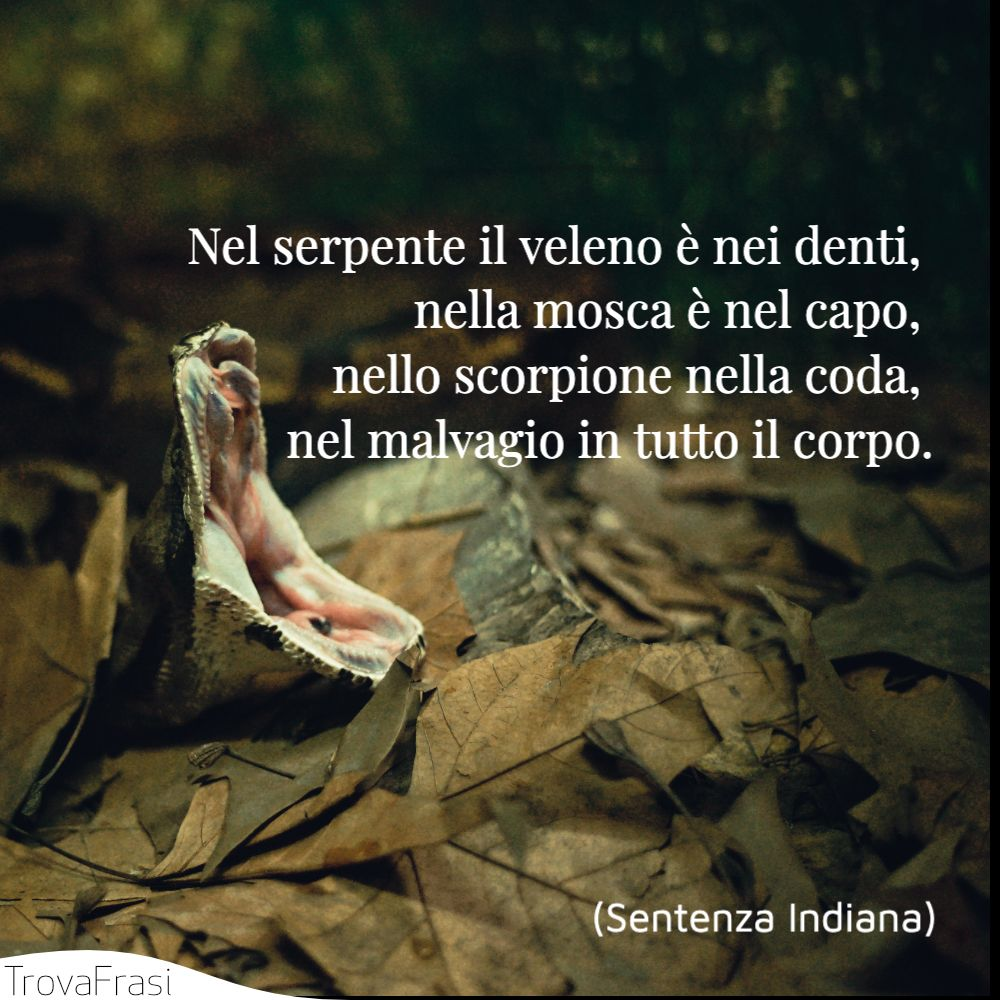 Nel serpente il veleno è nei denti, nella mosca è nel capo, nello scorpione nella coda, nel malvagio in tutto il corpo.