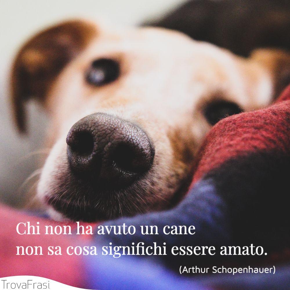 Le Frasi Sui Cani Per I Nostri Amici A Quattro Zampe