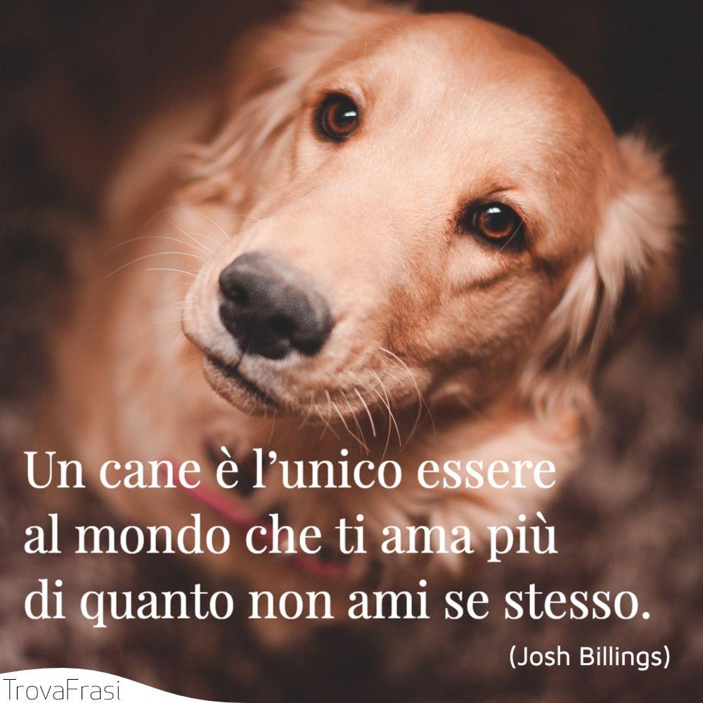 Un cane è l'unico essere al mondo che ti ama più di quanto non ami se stesso.