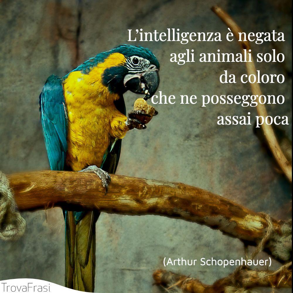 L'intelligenza è negata agli animali solo da coloro che ne posseggono assai poca
