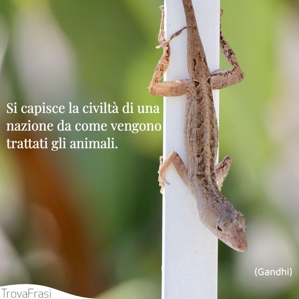 Si capisce la civiltà di una nazione da come vengono trattati gli animali.