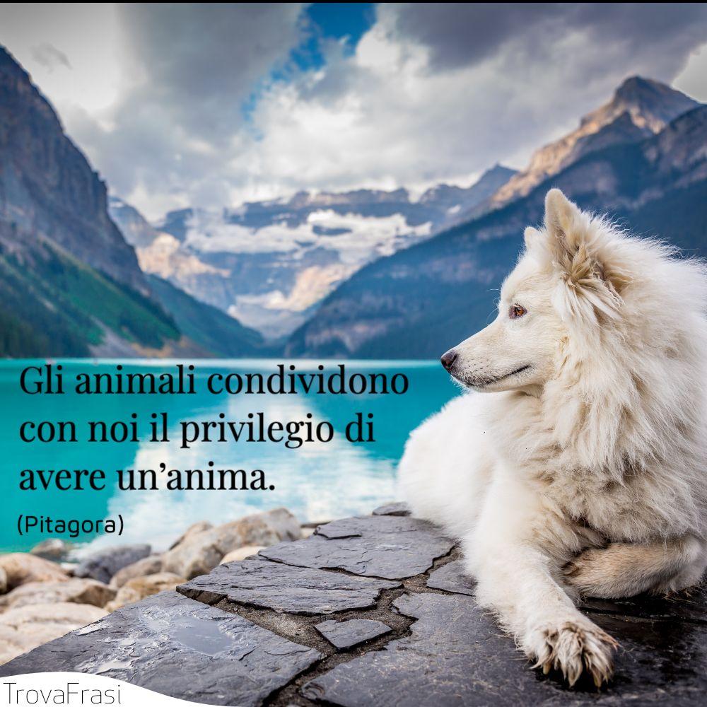 Gli animali condividono con noi il privilegio di avere un'anima.