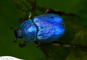 frasi sugli insetti