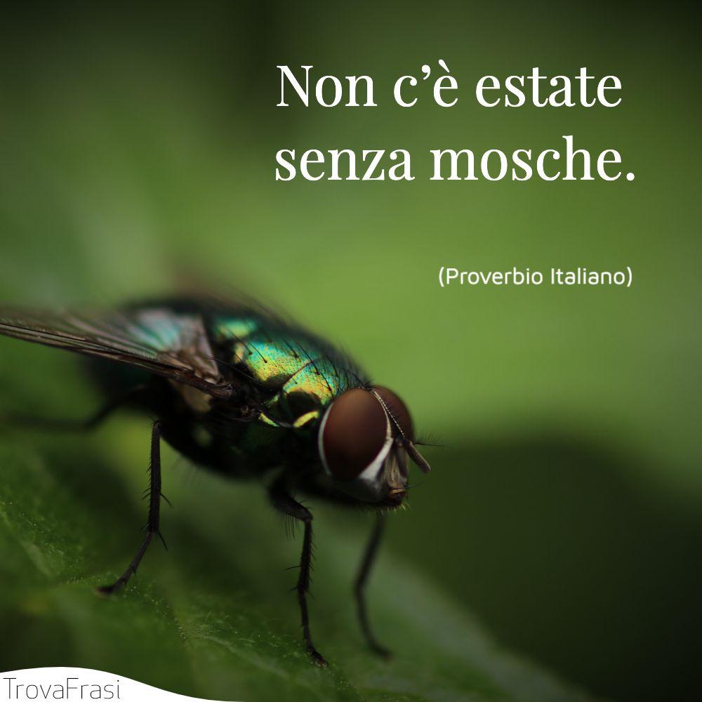 Non c'è estate senza mosche.