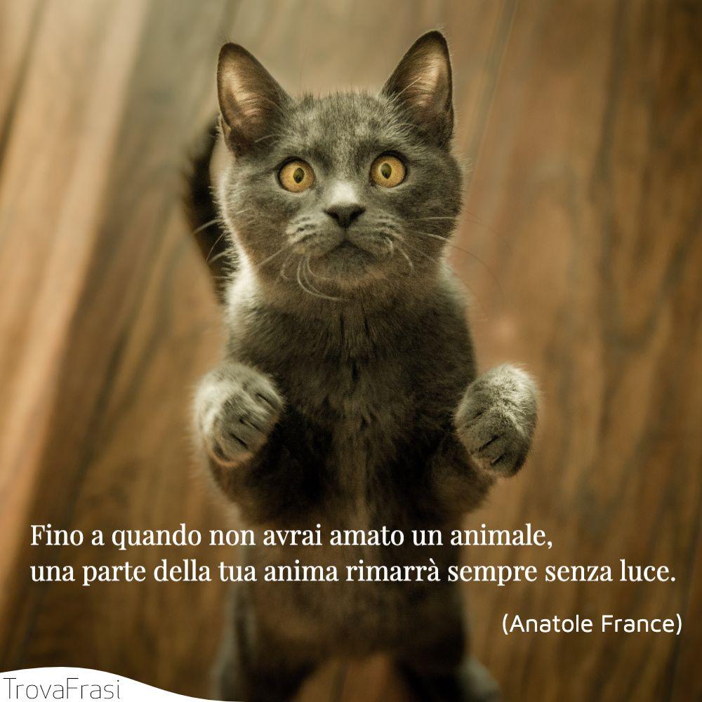 Fino a quando non avrai amato un animale, una parte della tua anima rimarrà sempre senza luce.