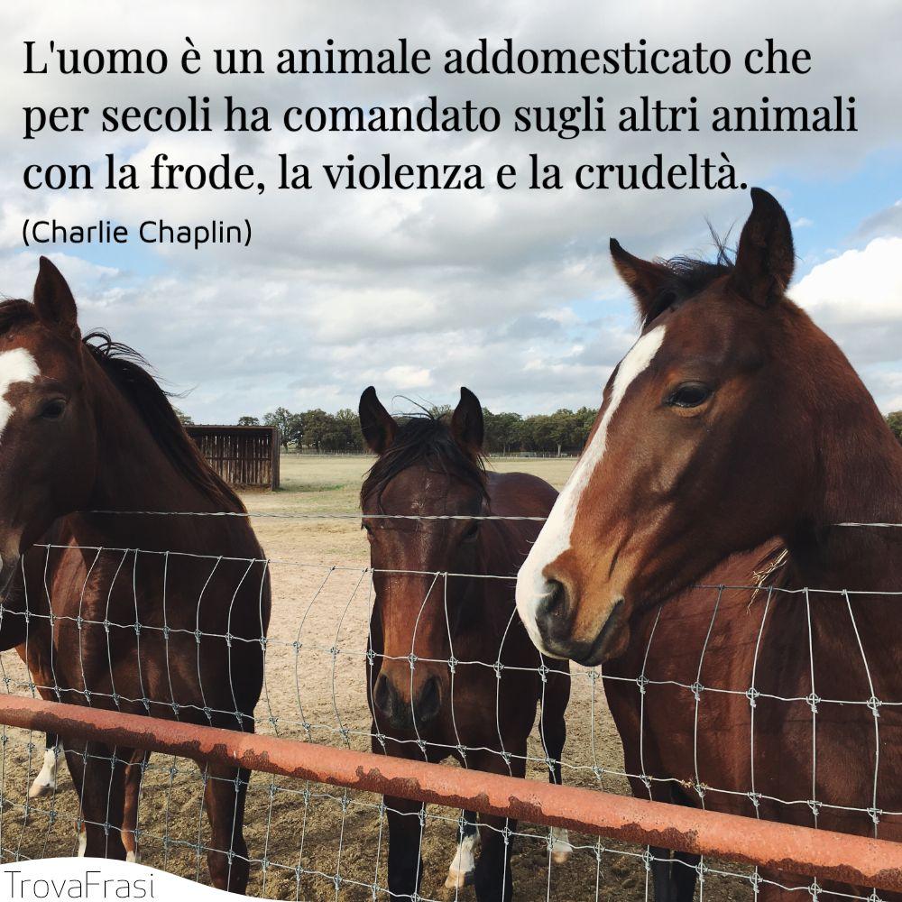L'uomo è un animale addomesticato che per secoli ha comandato sugli altri animali con la frode, la violenza e la crudeltà.
