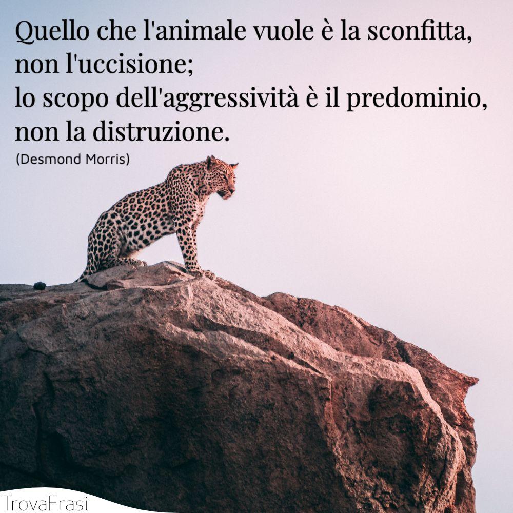 Quello che l'animale vuole è la sconfitta, non l'uccisione; lo scopo dell'aggressività è il predominio, non la distruzione.