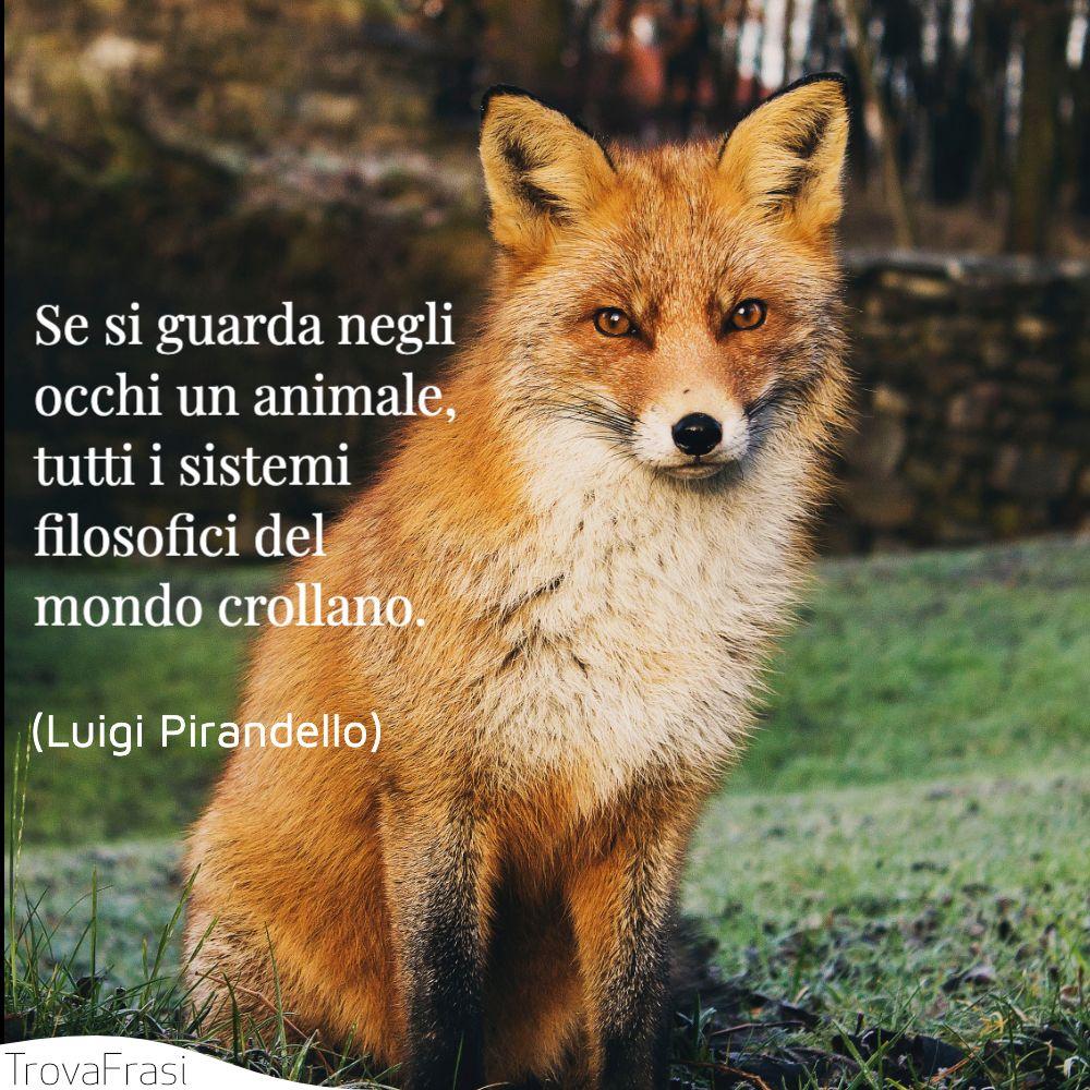 Se si guarda negli occhi un animale, tutti i sistemi filosofici del mondo crollano.