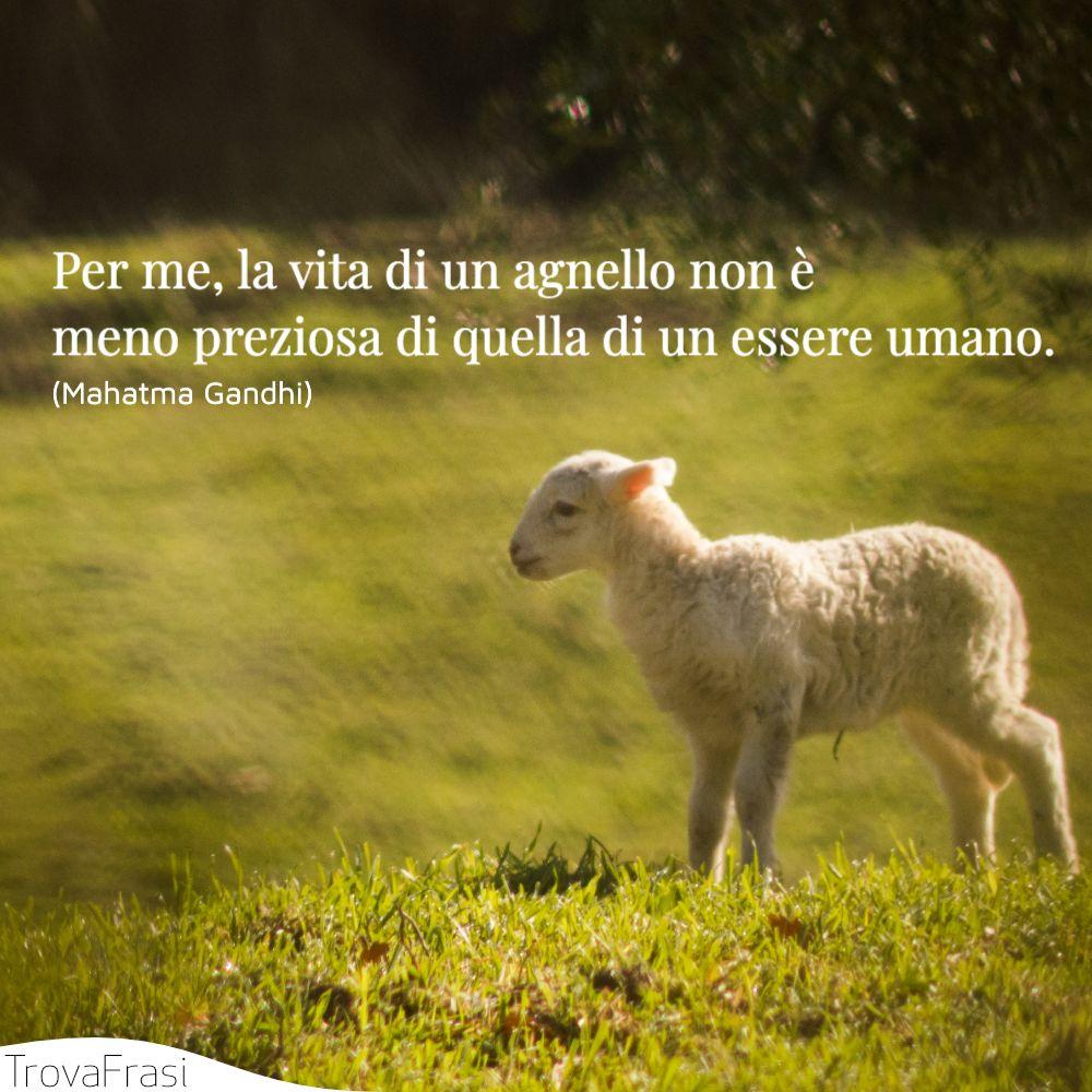 Per me, la vita di un agnello non è meno preziosa di quella di un essere umano.