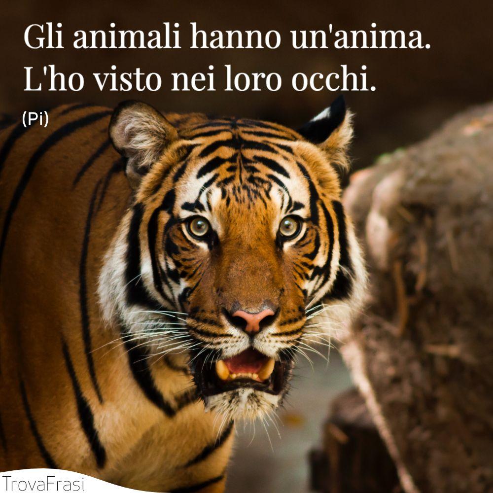 Gli animali hanno un'anima. L'ho visto nei loro occhi.