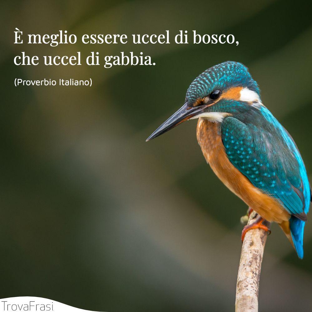 È meglio essere uccel di bosco, che uccel di gabbia.