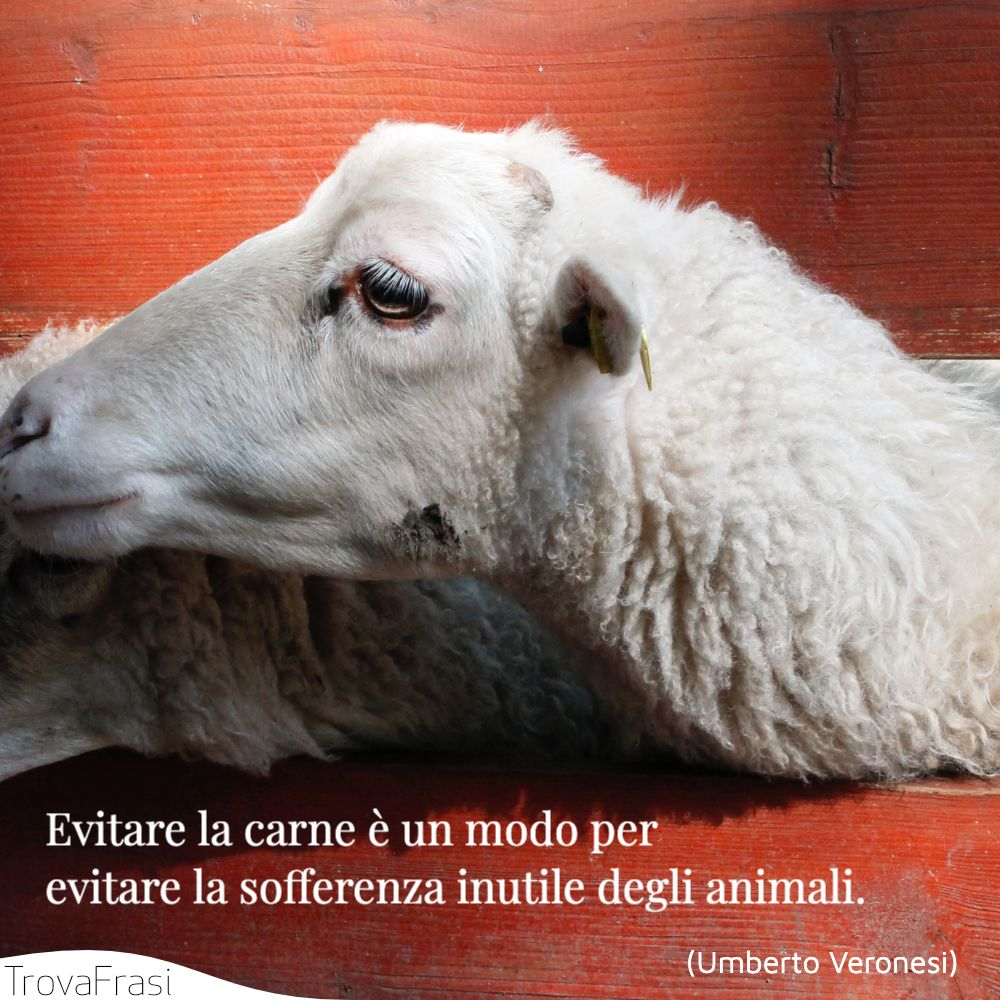 Evitare la carne è un modo per evitare la sofferenza inutile degli animali.