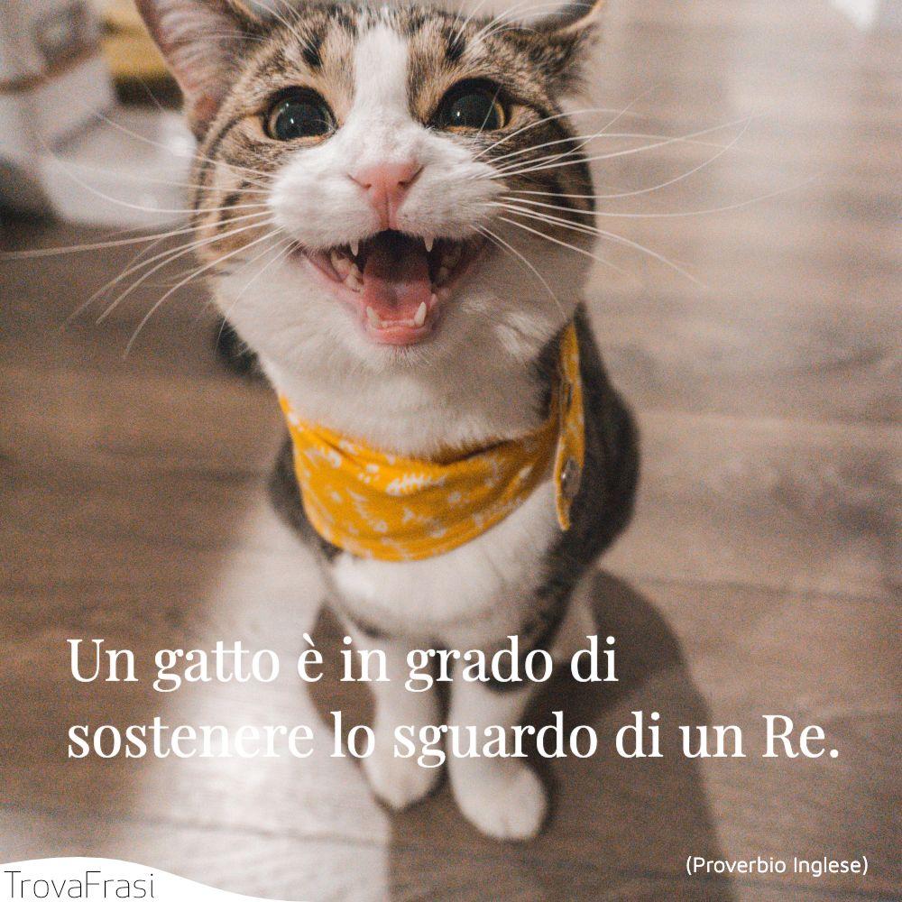 Un gatto è in grado di sostenere lo sguardo di un Re.