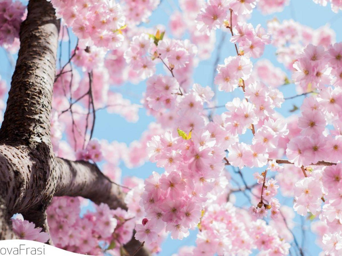 Frasi Sulla Primavera E La Rinascita Della Natura Trovafrasi