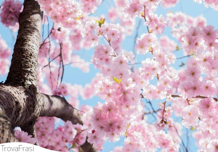 frasi sulla primavera