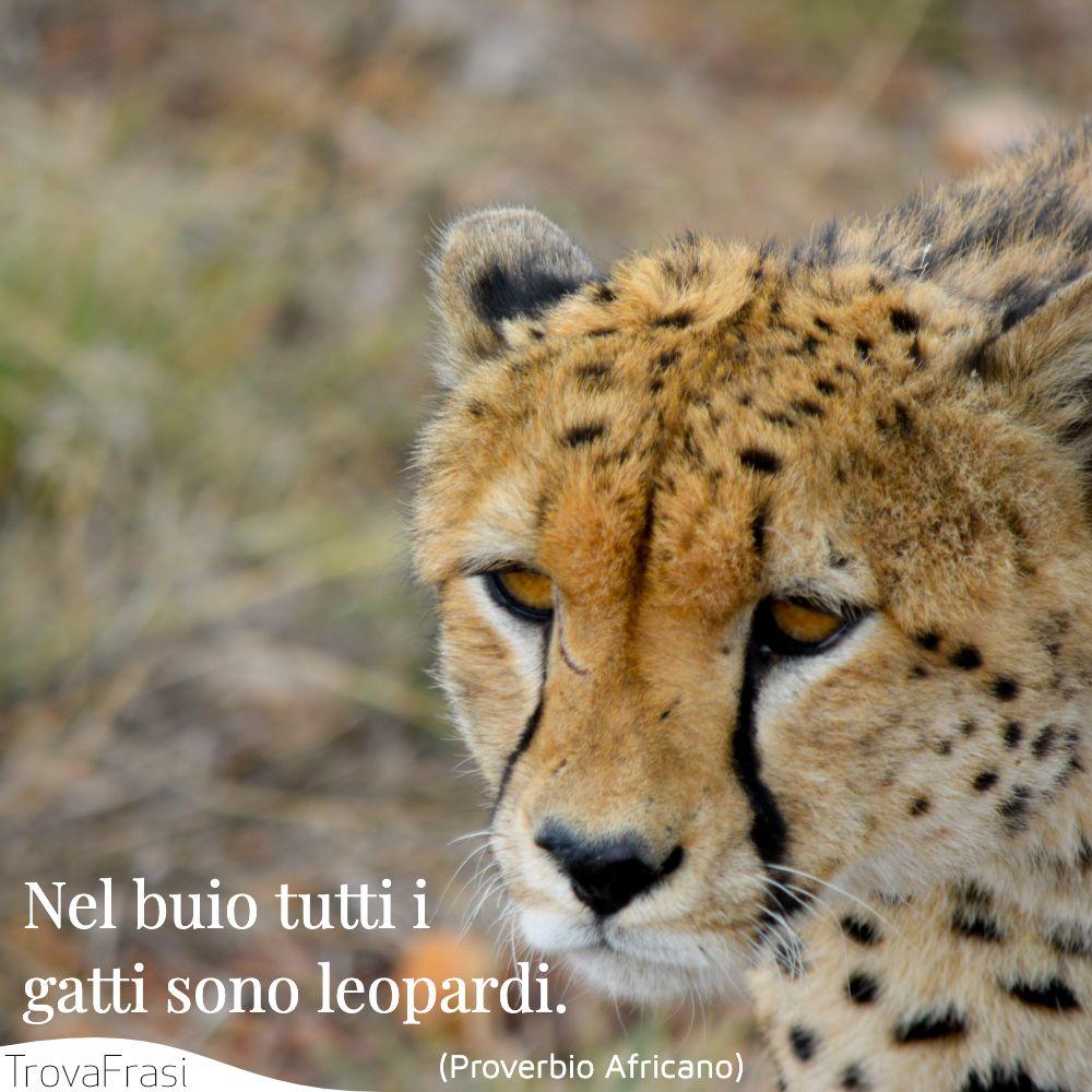 Nel buio tutti i gatti sono leopardi.
