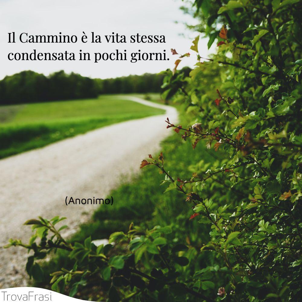 Il Cammino è la vita stessa condensata in pochi giorni.