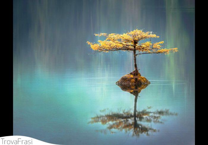 frasi sulle zen