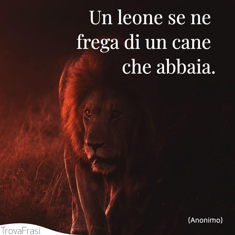 Un leone se ne frega di un cane che abbaia.