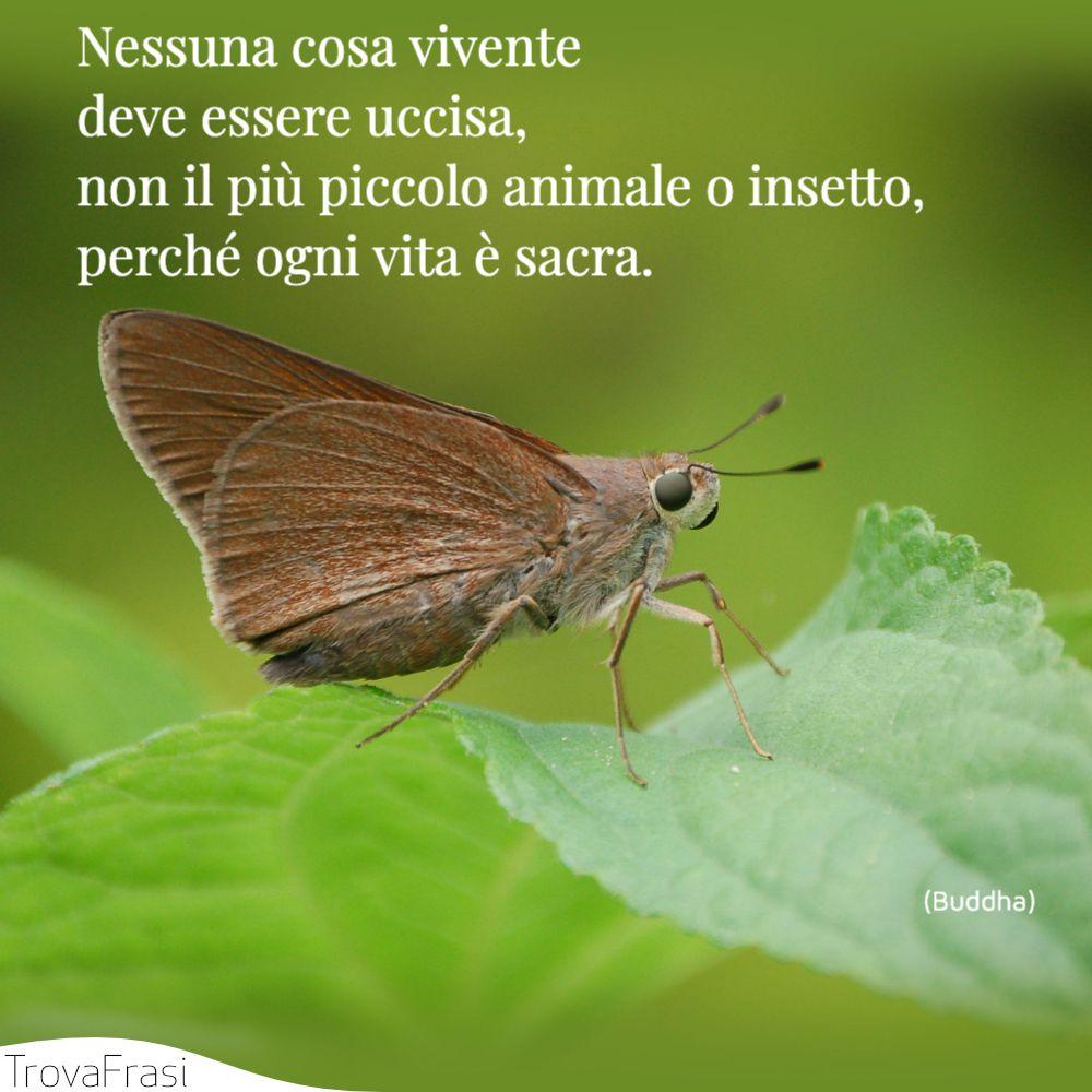 Nessuna cosa vivente deve essere uccisa, non il più piccolo animale o insetto, perché ogni vita è sacra.