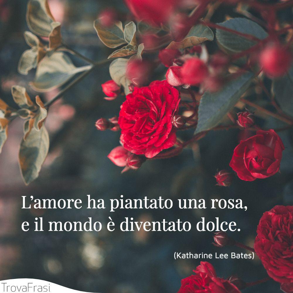 L'amore ha piantato una rosa, e il mondo è diventato dolce.