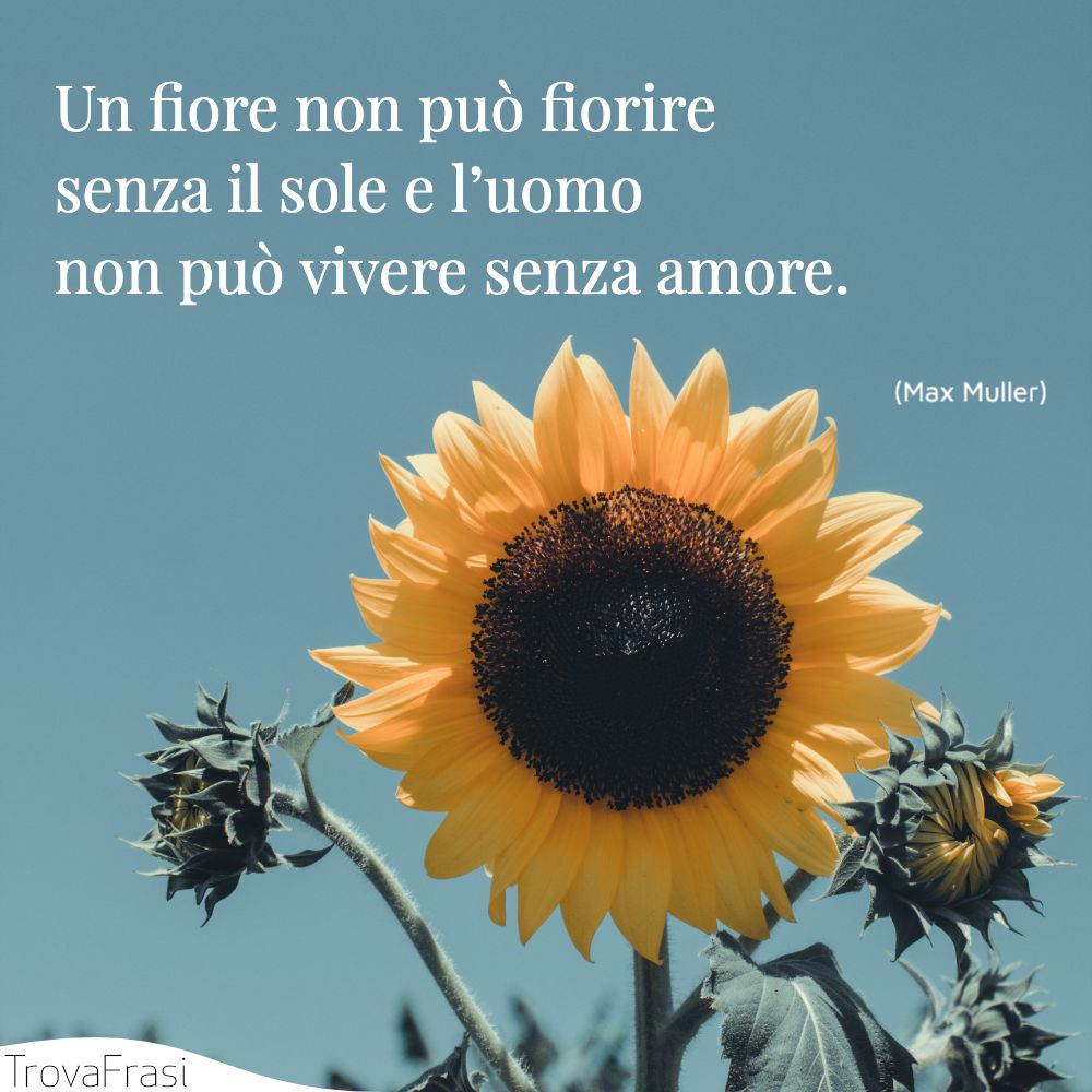 Un fiore non può fiorire senza il sole e l'uomo non può vivere senza amore.