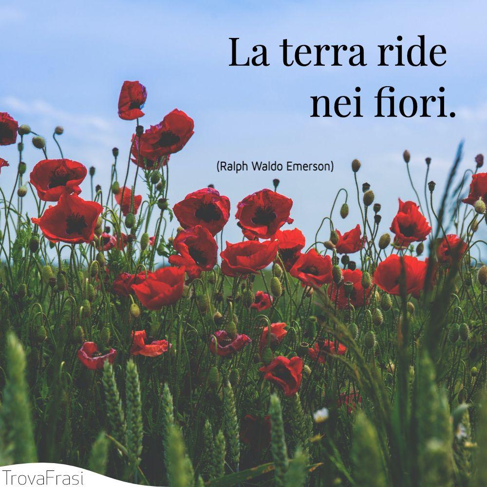 La terra ride nei fiori.