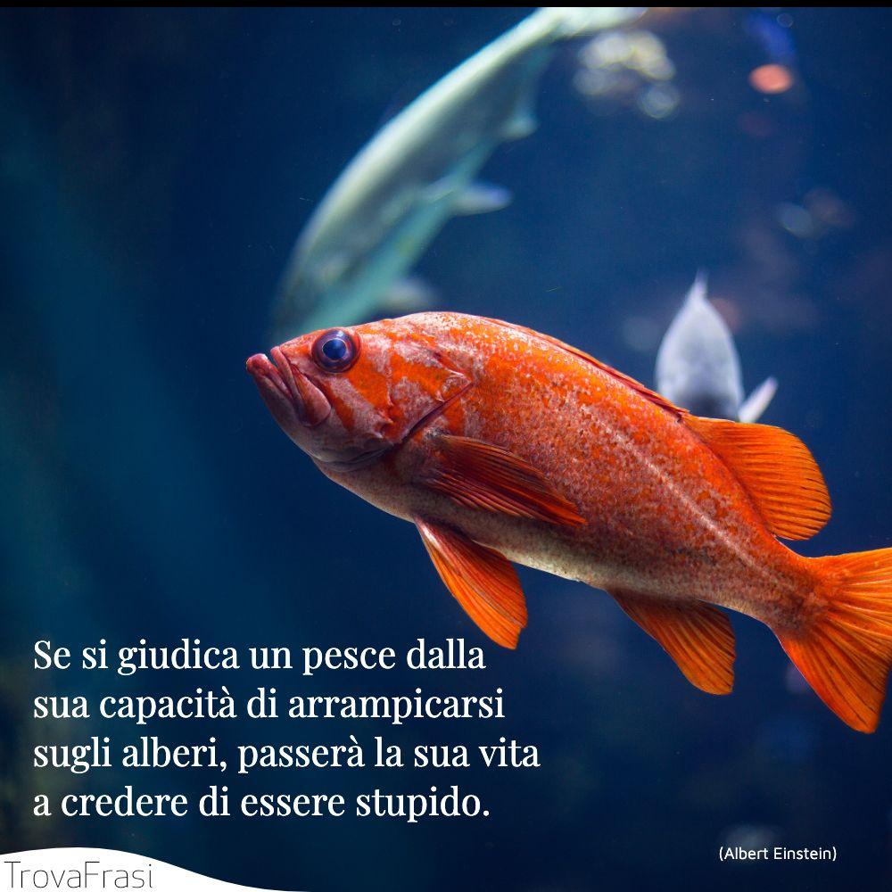 Se si giudica un pesce dalla sua capacità di arrampicarsi sugli alberi, passerà la sua vita a credere di essere stupido.