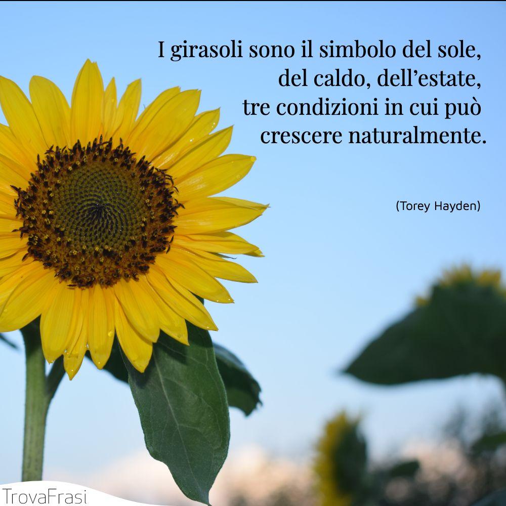 I girasoli sono il simbolo del sole, del caldo, dell'estate, tre condizioni in cui può crescere naturalmente.