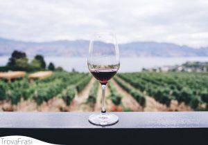 vinello e vino (cibo)