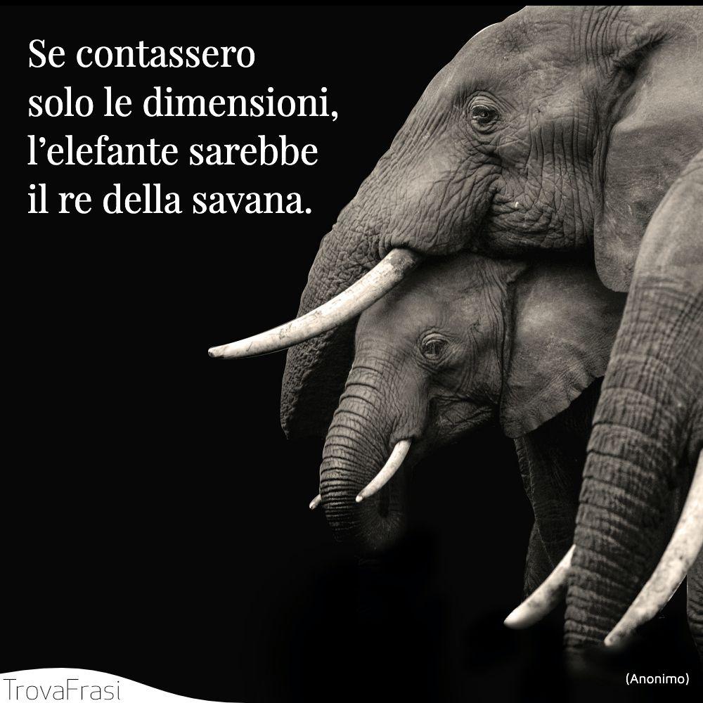 Se contassero solo le dimensioni, l'elefante sarebbe il re della savana.